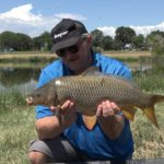 Common Carp on Tiger Nuts